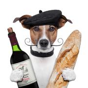 french dog wine baguette beret - stock illustration