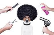 Hairdresser  scissors comb dog spray Stock Illustration