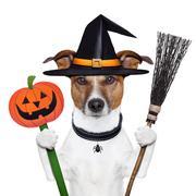 Halloween pumpkin witch dog Stock Illustration