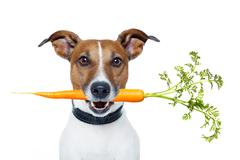 Healthy dog with a carrot Stock Photos