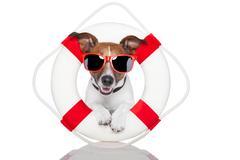 lifesaver dog - stock illustration