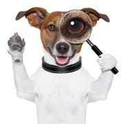 Dog with magnifying glass Stock Illustration