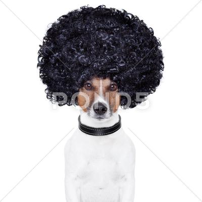 Stock Illustration of afro look hair dog funny