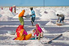Salt collecting in salt farm, india Stock Photos