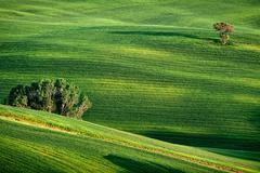 hilly landscape of tuscany - stock photo