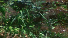 Otter plays with turtle 1 Stock Footage
