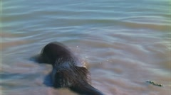 Otter plays with turtle 3 Stock Footage