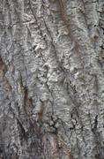 Arroyo tree texture Stock Photos