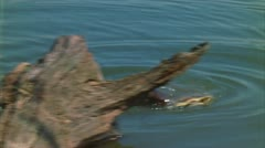 Otter plays with turtle 2 Stock Footage