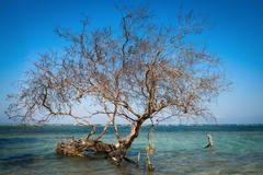 bare tree in tropical blue sea - stock photo