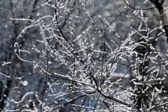 branches covered by hoarfrost - stock photo