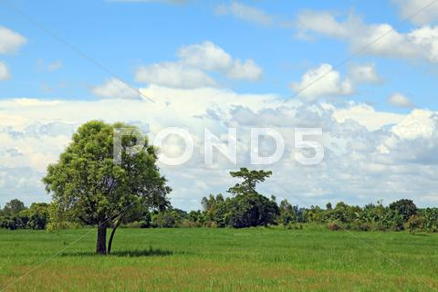 Stock photo of alone tree