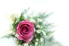 Stock Photo of natural pink rose corsage
