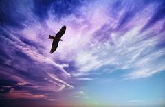 Bird of prey fly in blue cloudy sky Stock Photos