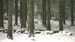 Forest floor in snow Bellever Stock Footage