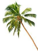 palm isolated on white background - stock photo