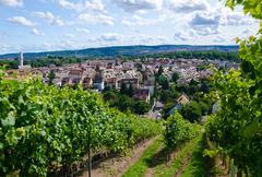summer vineyard - stock photo