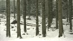 A pan of a snow covered pine tree forest floor Stock Footage