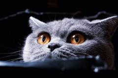 yellow cat's eye spying out of the hole - stock photo