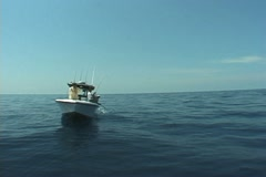 Dolphin Fishing Stock Footage