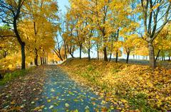 Stock Photo of autumn maple trees in  park