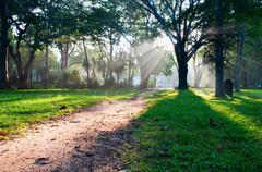 mystical path in tropical forest - stock photo