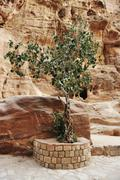 The siq - ancient canyon in petra, jordan Stock Photos