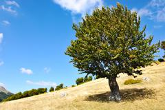 One tree and grass land Stock Photos