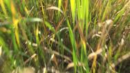 Stock Video Footage of POV, Running, Walking in Grass in Delta, Footsteps, Passing View, Moving Image