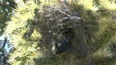 Bird Carries Nest Fluff Stock Footage