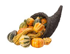 cornucopia gourds isolated with clipping path - stock photo
