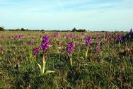 Purple spring flowers Stock Photos