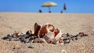 Stock Photo of Seashell on the Beach