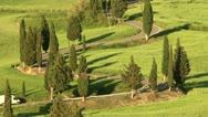 Winding Cypress Lane Stock Footage