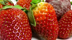 Moldy Strawberries - stock footage
