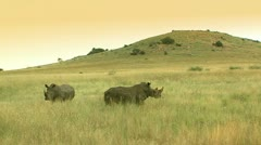 Two rhinos in africa Stock Footage