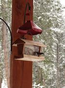 mountain chickadee on feeding station, . in hills above  . vail valley, .colo - stock photo