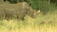 Two rhinos in south africa Stock Footage