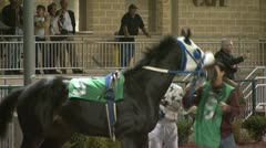Jockey Mounting Horse Before a Race at the Track - stock footage