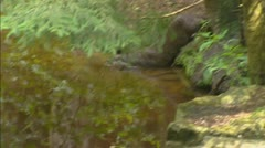 European otter (lutra lutra) dives, swims Stock Footage