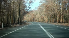 Tree Country Drive - stock footage
