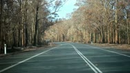 Tree Country Drive Stock Footage