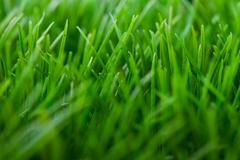 Stock Photo of grass background