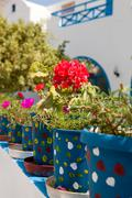 geranium pots, santorini, greece - stock photo