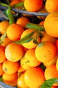 Fresh oranges Stock Photos