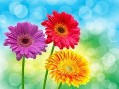 close up of gerber flower - stock photo