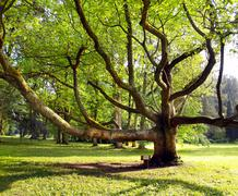 Very old tree in the park - stock photo