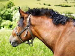 Portrait of horse - stock photo