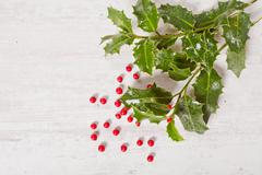 holly and red berries - stock photo