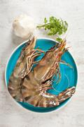 fresh raw big prawn on a blue plate - stock photo